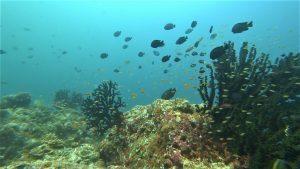Pulau Weh dive